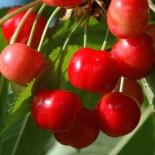 Confiture de Cerises Rouges d'Itxassou